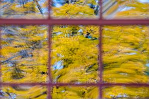 Autumn View DT26689 by detphoto