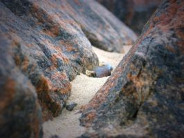 Between the rocks by Area29ED6