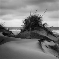 Dunes of Nag's Head by aponom
