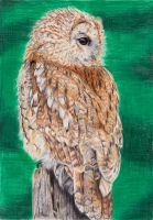 Tawny Owl by Thanatasia666