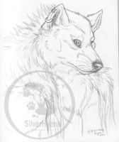 Timber Wolf Portrait by TheSilverhyena