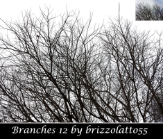 Branches 12 by Brizzolatto55