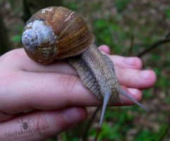 Big Snail on my hand :3 by TheFunnySpider