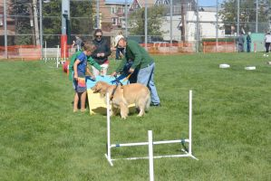 2014 Dog Festival, Try It Dog Obstacles 3 by Miss-Tbones