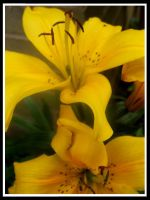 :Yellow Lilly: by EmiValo666