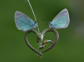 spring_love_ by lisans