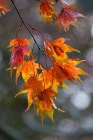 Autumn leaves 4 by TheEtherealSoul