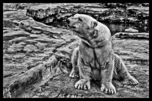 Ursus maritimus by FallesenPhotography