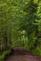 Green WAY by EtemColaK