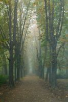 Fog in Park by Anonimus79