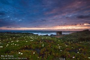 Mar de Flores by too-much4you