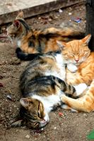 Cat Pile. by johnwaymont
