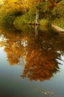 Romantic autumns reflection by Aimelle