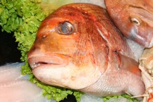 fish food by priesteres-stock