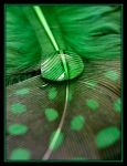 Green Supreme     by Pjharps - Ye�il