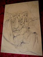 WIP The new years tiger by acrylicwildlife
