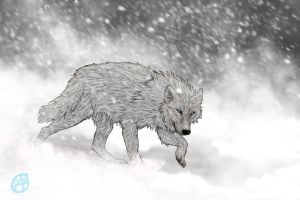 Alone in snow by wolfyLRiina