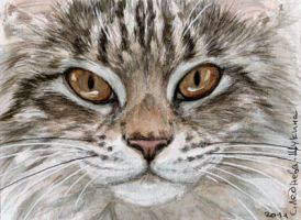 ACEO Young Tabby Cat by sschukina