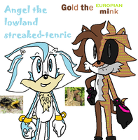 Gold and Angel by cinostheechidna
