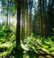 Deepvalleyforested by ainoani