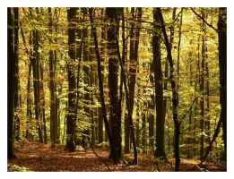 I sang of leaves of gold by Wilithin