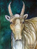 Saiga Antelope by HouseofChabrier