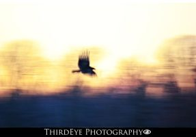 Vulture at Sunset by The-ThirdEye