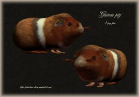 guinea pig by priesteres-stock