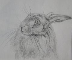 Hare by Twiggles13