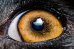 a dog eye by ssabbath