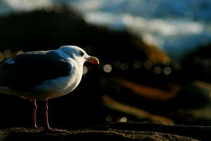 Life of the Seagull by emibiohazard
