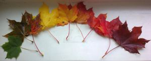 Autumn leaves by paulif