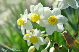 Spring Flowers by ShelbyMelissa