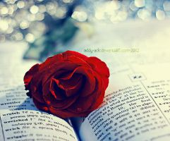 rose and a book by addy-ack