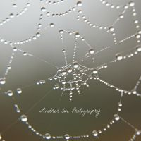 Dewy Web by AnotherEve