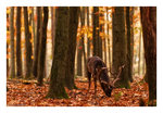 The King of Fallen Leaves by NicolasAlexanderOtto