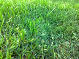 Grass by fent-196