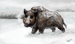 Snowy Boar by TheScreepy