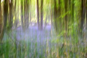 Bluebells by LughoftheLongArm