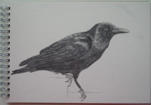 Crow pencil drawing by kult