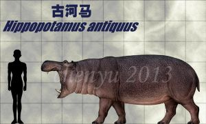 Hippopotamus antiquus by sinammonite