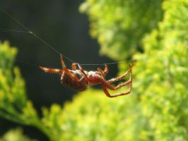 Spider in web series two 05 by teletran