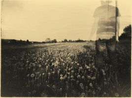 Into The Dandelions by i-gledam