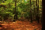 Stock Forest Path by Celem