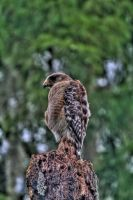 The Watcher by Johnt6390