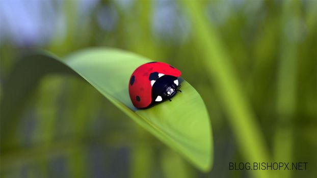 3D Lady bug without legs by chrbet