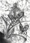 Two  Butterflies by christi0anggraini
