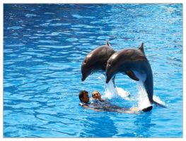Playing with Dolphins by Thomas61