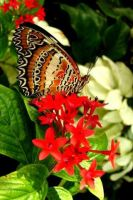 Lacewing Butterfly by crystalbreath81