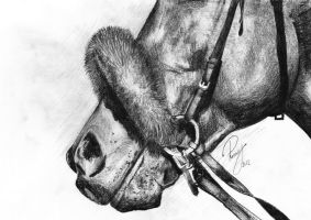 The horse nose. by Renny222